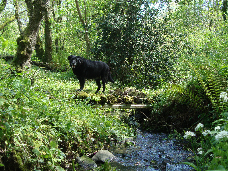 Dog Friendly Comfortable Self Catering Cottages North Devon