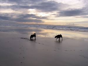 Dogs on Saunton Sands North Devon