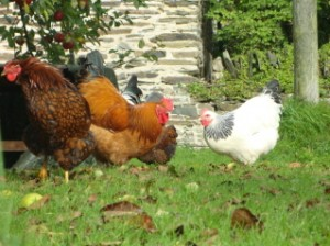 Holiday on a Farm Self Catering Holiday Cottage North Devon