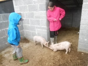 Animal Feeding at Self Catering Farm Holiday Cottage North Devon