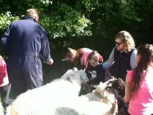 Feeding Animals at Lower Hearson Farm Self Catering Holiday Cottages North Devon
