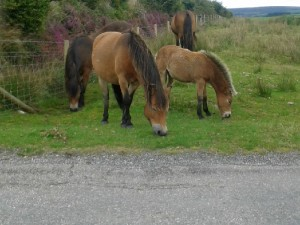 Animal Feeding at Farm Holiday Cottage Self Catering North Devon