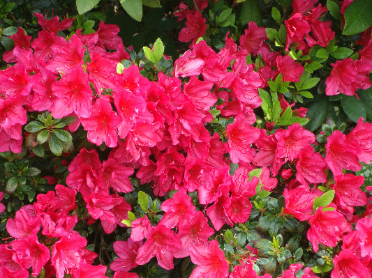 Azalea at Lower Hearson Farm Self Catering Holiday Cottages North Devon