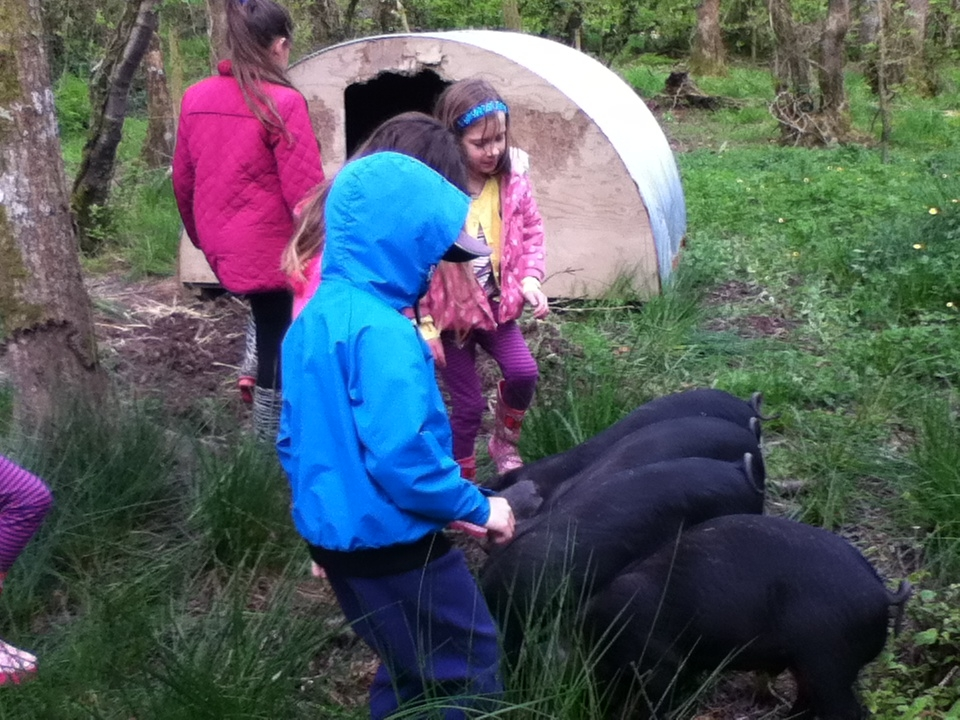 Pig Feeding at Lower Hearson Farm Self Catering Holiday Cottages North Devon