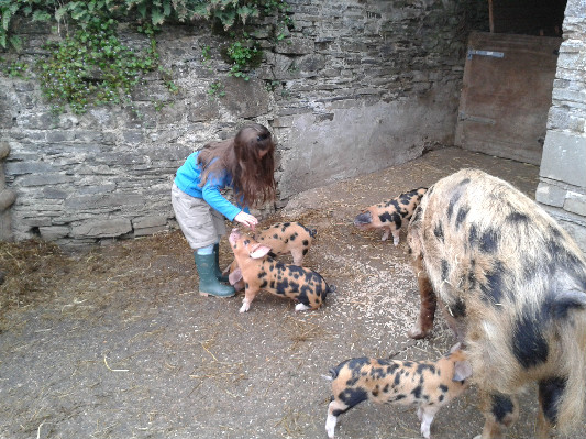 Phoebe Piglets 2014 at Lower Hearson Farm Self Catering Holiday Cottages North Devon