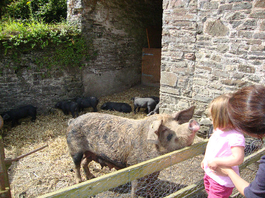 Stroking Bracken at Lower Hearson Farm Self Catering Holiday Cottages North Devon