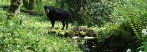 Dog Friendly Farm Holiday Self Catering Cottage North Devon