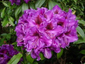 farm holiday self catering holiday cottages north devon rhodo