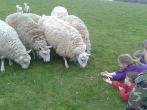 Animal Feeding Farm Holiday Cottage Accommodation Self Catering North Devon