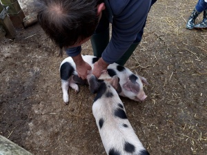 Farm Holiday Animal Feeding Self Catering Cottage Accommodation North Devon