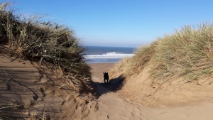 Dog Friendly Holidays North Devon